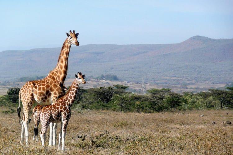 Kenya Flight Deals