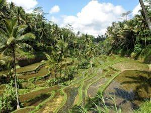 Bali Deals