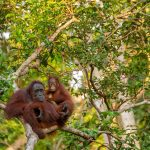 borneo travel deal